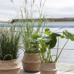 Bộ 3 Giỏ cỏ bàng Decor đựng chậu cây trang trí nhà